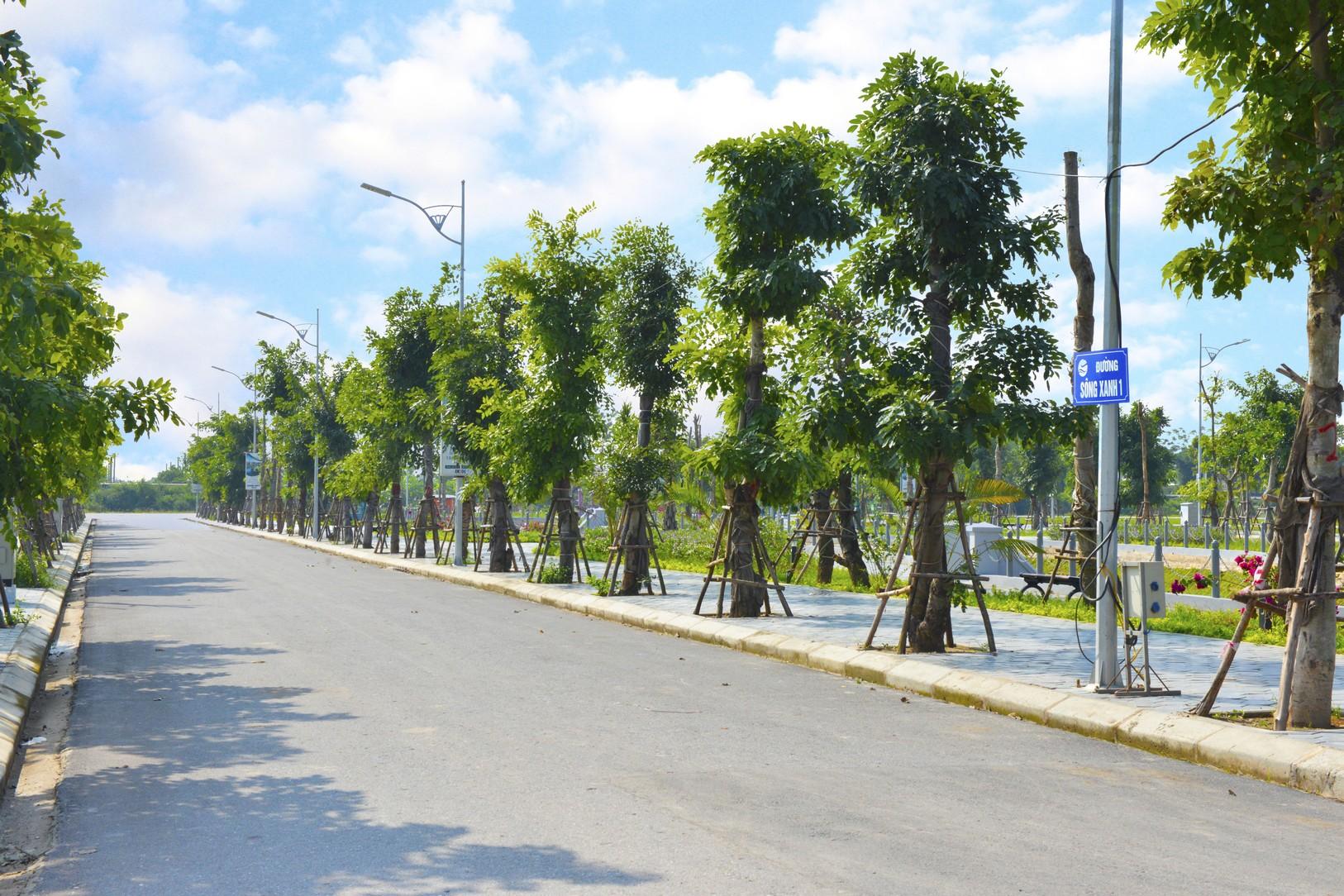 hàng cây